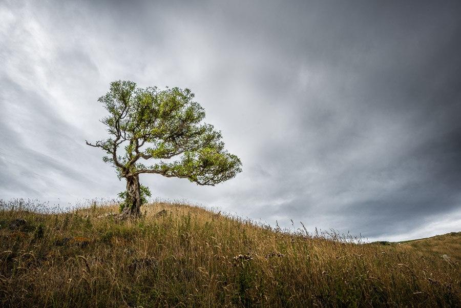 New Zealand hillside tree
