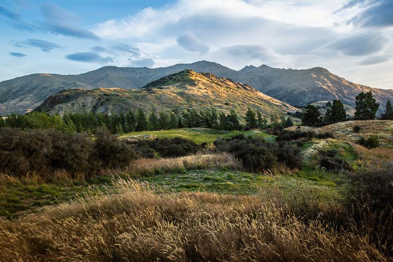 Golden Hills in New Zealand